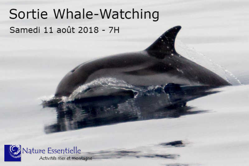 Whale-Watching Day!